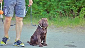 Hund-Campingplatz