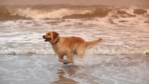 Hund-Strand-Brouwersdam